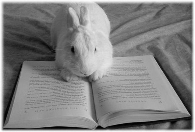 readingbunny